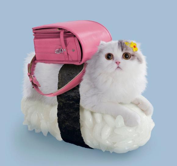 Cat Sushi Schoolgirl