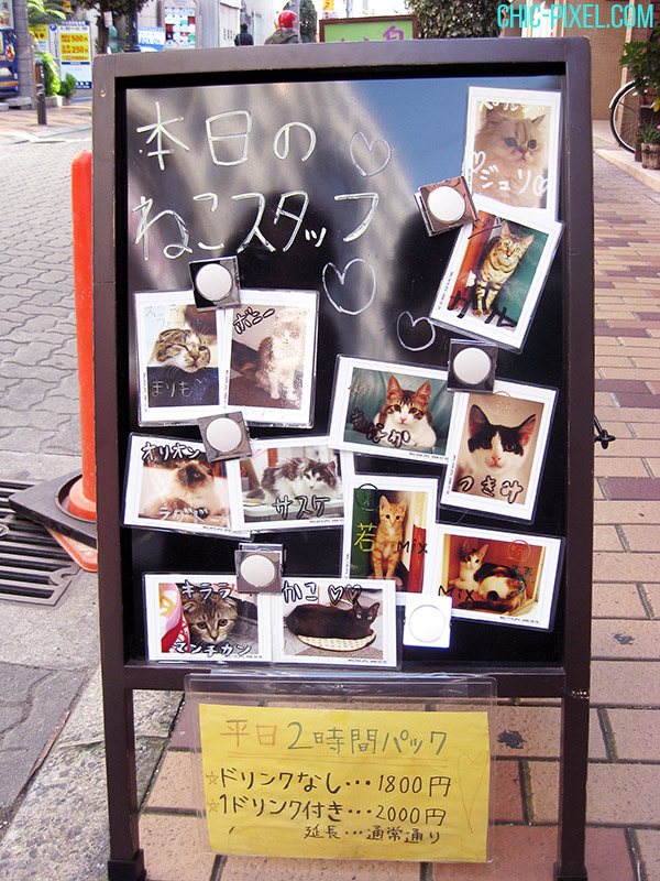Nyanny Japanese cat cafe