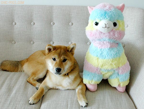 Rainbow Alpacasso Amuse plush review shiba puppy size comparison