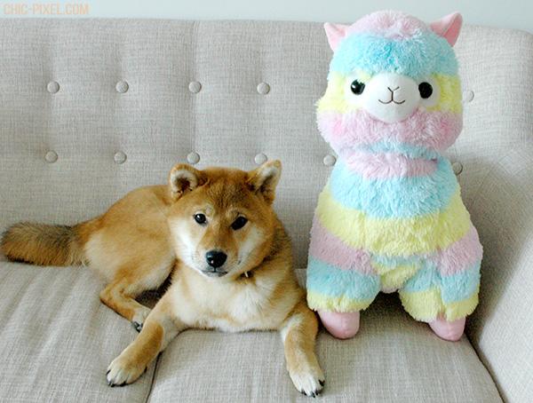Rainbow Alpacasso Amuse plush review shiba puppy size comparison